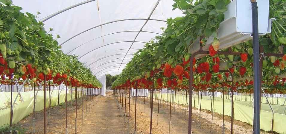en karlı tarım ürünleri